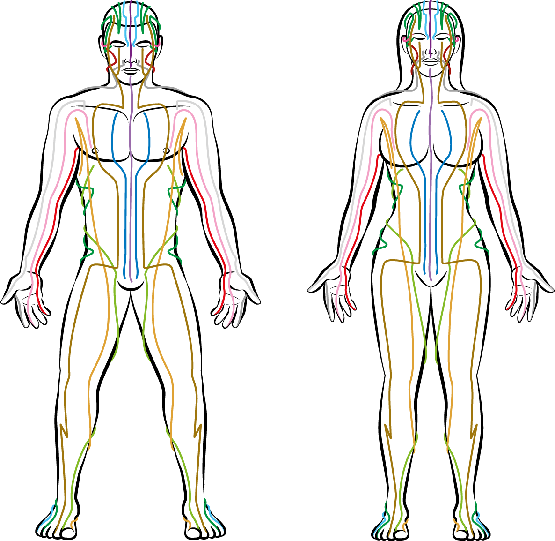 energibaner i kroppen